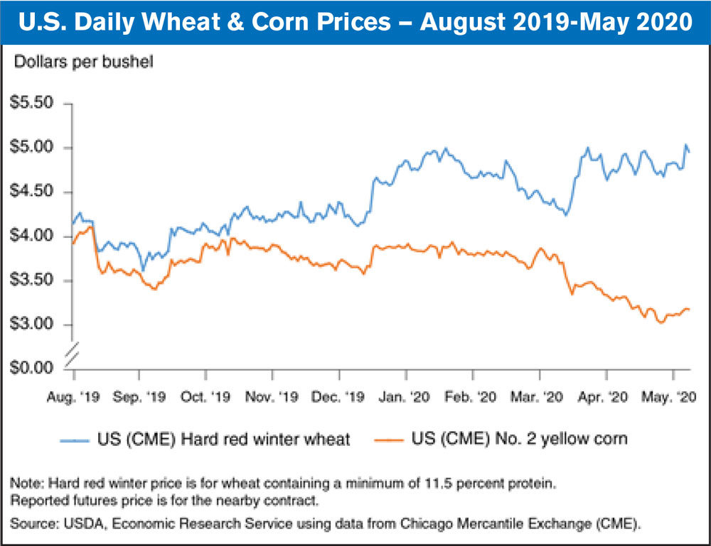 us daily wheat and corn prices